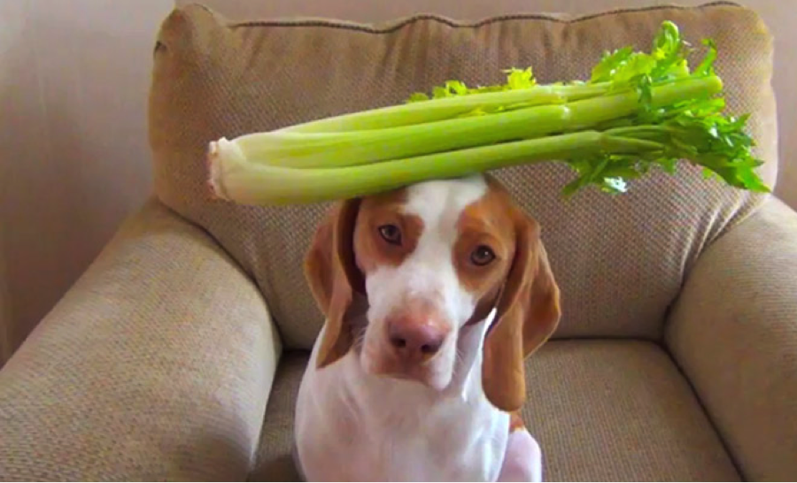 Can Dogs Eat This Epic Guide To 105 Foods Apples