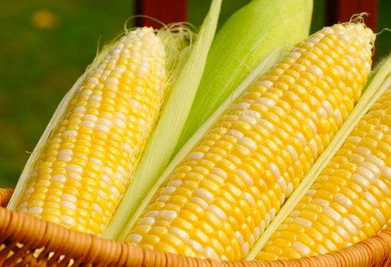 Can My Dog Eat Corn Kernels