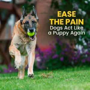 K9-Nature-Glucosamine-Chondroitin-MSM-Ease-the-pain